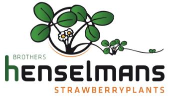 Henselman maasikataimed